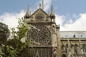 Notre Dame With Flowers