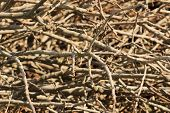 pic of fieldstone-wall  - Branches texture  - JPG