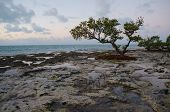 Trees On A Reef Beach.