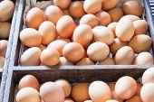 Farm Fresh Chicken Eggs In Wooden Crates