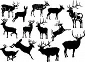 Thirteen Deer Silhouettes
