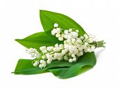 bouquet of lilies of the valley isolated on white background