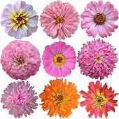 Set Of Pink - Orange  Flowers Isolated On White