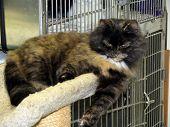 Beautiful, Sad Shelter Cat