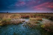 Dramatic Sunset Over Wild Bog