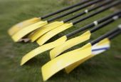 Yellow Oars Before Race