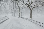 Snow In Central Park - Peaceful Winter Atmosphere - New York