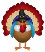 Colorful Turkey With Pilgrim Hat Illustration