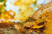 Beautiful autumn leaves on hay with wicker basket on table on bright background