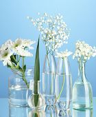 Plants in various glass containers on blue background