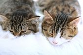 Two cats on plaid close-up