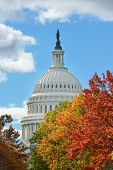 U.S. Capitol dome in Autumn - Washington DC, United States