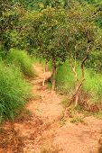 Vibrant Jungle Trail