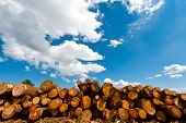 picture of afforestation  - Sawed Firewood Dropped in a Pile on the Sky Background - JPG