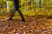 Nordic Walking Sport Run Walk Motion Blur Outdoor Person Legs Forest Fall Autumn