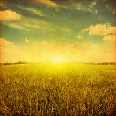 Sunset over green grass field. Grunge style photo.
