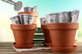 Business concept: growing money in the flowerpots on nature background