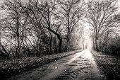 Black And White Photo Of A Road Surrounded My Trees With Light At The End