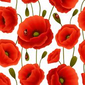 Poppy seamless pattern