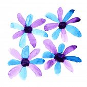 Violet watercolor flowers over the white background