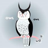 Portrait of the long-eared owl