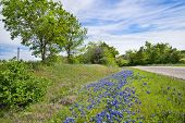 stock photo of bluebonnets  - Texas bluebonnet spring vista along country road - JPG