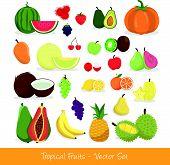 Tropical Fruit Vector Set