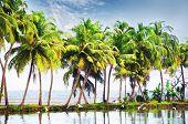 Palm landscape