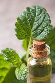 Aromatic Oils Of Lemon Balm In A Glass Bottle