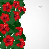 Floral design background. Hibiscus flowers.