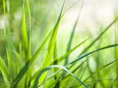 Texture and background from green grass