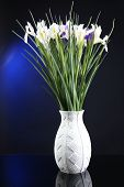 Beautiful irises on dark blue background