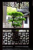 Large bonsai tree in ancient Yu Yuan Garden in Shanghai, China