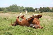 Happy Horse Rolling In The Grass