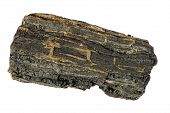 Piece Of Carbonized Wood From Isle Of Wight