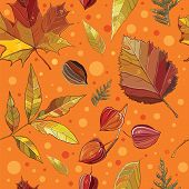 picture of elm  - Vector seamless pattern with autumn set leaves nuts tree - JPG