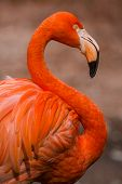 image of florida-orange  - Flamingo - JPG