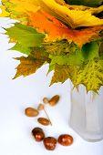 Autumn maple leaves in vase