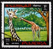 Postage Stamp Fujeira 1969 Giraffe, Animal