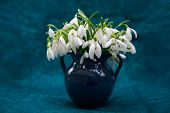 Bouquet of fresh snowdrops in a vase