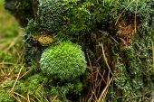 Round Moss On A Tree Stump