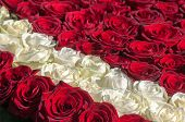 Red And White Roses As Background