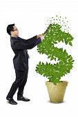Male Entrepreneur Manage The Money Tree