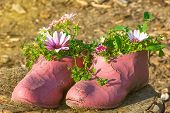 Old Painted Cracked Rubber Shoes As A Flower Pot