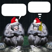 Two drunken chimpanzees have a fun on christmas party. Picture with speech bubbles.