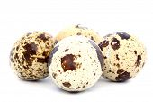 Four Spotted Quail Eggs