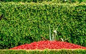 Flowerbed Of Red Flowers And Cuted Bush In Park