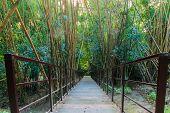 Wood Walkway On A Wild Park