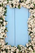 Hawthorn blossom flower frame forming an abstract border over wooden blue background.