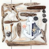 foto of driftwood  - Beach and seaside shells - JPG